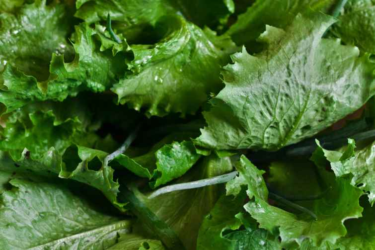 salad-leaf-leaves-green.jpg